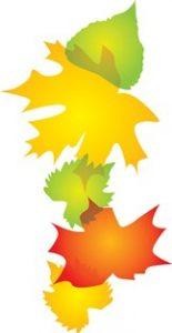 leaves_12904c